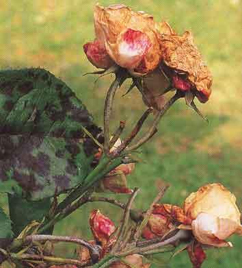 Plant Disease Control