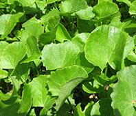 Online Plants Edible Online Online Herbs Herbs Plants Edible Edible Plants Online Herbs Rj3ALc54Sq