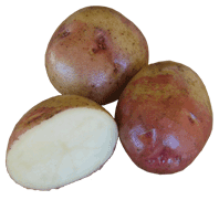 jersey royal seed potatoes